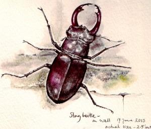 Stag beetle0001_2