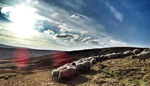 hill shepherding