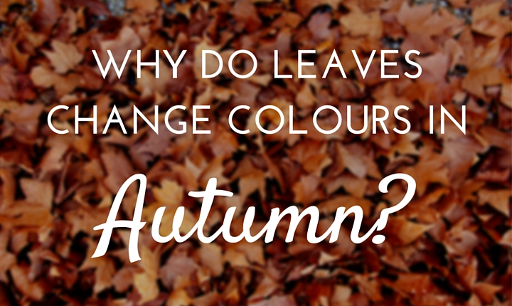 leaves change colour