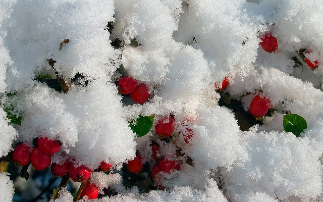will it be a white christmas 2014
